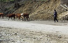 Ingushetia - Old man with cattle.jpg