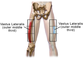 Vastus lateralis site in adult