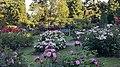 Int. Rose Test Garden, PDX, 2017 - 4.jpg