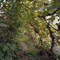 Interieur lange tomatenkas - Goor - 20405158 - RCE.jpg