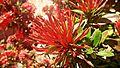 Ixora flowers 4 edit.jpg