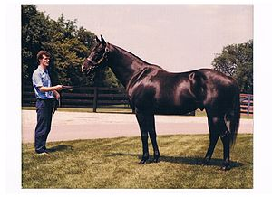 J. O. Tobin - At Spendthrift Farm in 1981