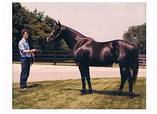 J. O. Tobin American Thoroughbred racehorse
