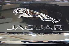 Jaguar - logo (MSP15).JPG