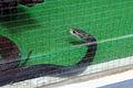 Japan Snake Center 01.jpg