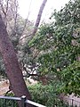 Jardín de Monforte 87.jpg
