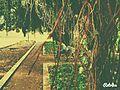 Jardin d'essais botaniques rabat.jpg