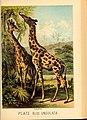 Johnson's household book of nature (Plate XLIII) (7268673602).jpg