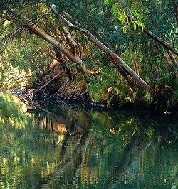 نهر الاردن 250px-Jordan_River_B