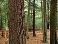 Joyce Kilmer Natural Area (Revisited) (5) (8085143850).jpg