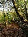 Jubilee Pathway - geograph.org.uk - 1573471.jpg