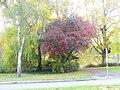 Katharinenufer, Trier - geo.hlipp.de - 23108.jpg