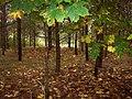 Kemeri forest - panoramio.jpg