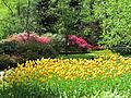 Keukenhof Garden (39).JPG