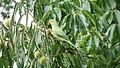 Kew Gardens - London - September 2008 (2959538536).jpg