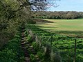 King's way by Bottom Copse - geograph.org.uk - 1273857.jpg