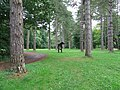 Kings forest picnic area - geograph.org.uk - 950913.jpg