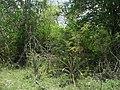 Kintunich, Yucatán (09).jpg
