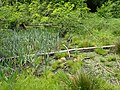 Kirkeskov (mosen) 02.jpg