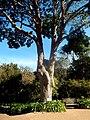 Kirstenbosch National Botanical Garden by ArmAg (27).jpg