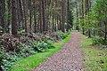 Klövensteen Waldweg mit Benjeshecke 01.jpg