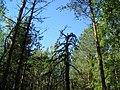 Kortkerossky District, Komi Republic, Russia - panoramio (1).jpg