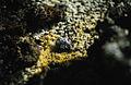 Krafla Sulfur.jpg