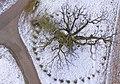 Kreuzeiche aus der Vogelperspektive.jpg