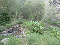 Kubbe dağı deresi - panoramio.jpg