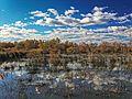 L'automne à l'étang de Scamandre.jpg