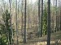 Līksna Parish, LV-5456, Latvia - panoramio - alinco fan (4).jpg