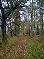 Landschaft am Grenzstein 104 KS KP.jpg