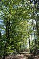 Landschaftsschutzgebiet Gütersloh - Isselhorst - Wäldchen am Krullsbach (4).jpg