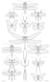 Largest insects size comparison.png
