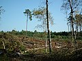 Lasy, okolice wsi Ruks Mlyn (2).jpg