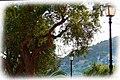 Laternen - panoramio (1).jpg
