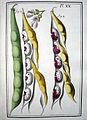 LeBerryais Haricots planche 20.jpg