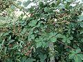 Le petit jardin, ArmAg (5).jpg