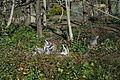 Lemurs @ Parc Zoologique de Paris (Zoo) @ Paris (26253688072).jpg