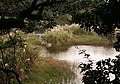 Lengshuikeng Wetland 冷水坑溼地 - panoramio.jpg