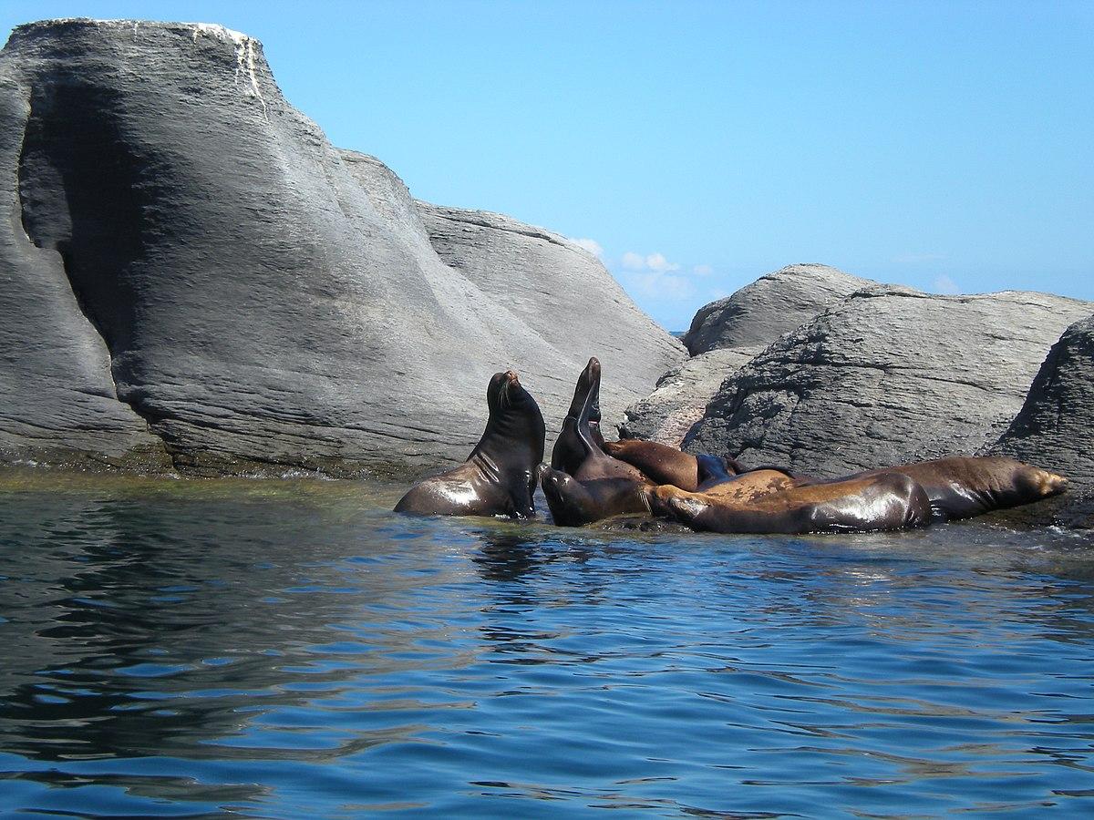 Archivo:Leones Marinos en Isla Coronado, Loreto, Baja california Sur.jpg -  Wikipedia, la enciclopedia libre