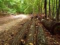 Lesná cesta nad traťou - panoramio (1).jpg