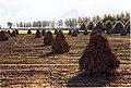 Lewedorp Postweg View SouthWest.jpg