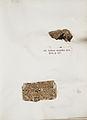Lichenes Helvetici IX X 1833 023.jpg