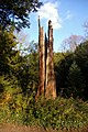 Lightning tree - geograph.org.uk - 1739586.jpg