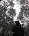 Loano hutan pinus.jpg