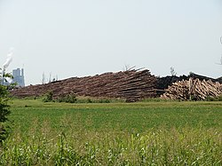 Felled trees sit in stacks outside of Pine Bluff