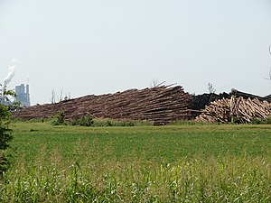 Arkansas Timberlands - Image: Logging, Pine Bluff, Arkansas