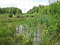 Longmoor Bog Nature Reserve - geograph.org.uk - 1350093.jpg