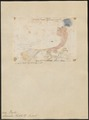 Lorius kuhlii - 1824-1834 - Print - Iconographia Zoologica - Special Collections University of Amsterdam - UBA01 IZ18500308.tif